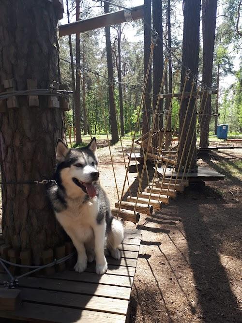 STIHL rope park