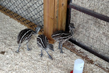 Pine Grove Zoo, Little Falls, United States
