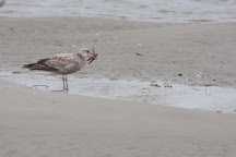 Tideline Tours, Folly Beach, United States