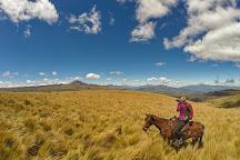 Neotropical Nature & Birding Trips, Quito, Ecuador