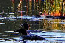Pitcher Pond, Camden, United States