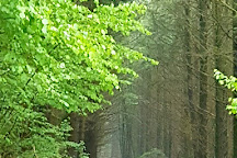 Cascade de la Pisserotte, Arfeuilles, France