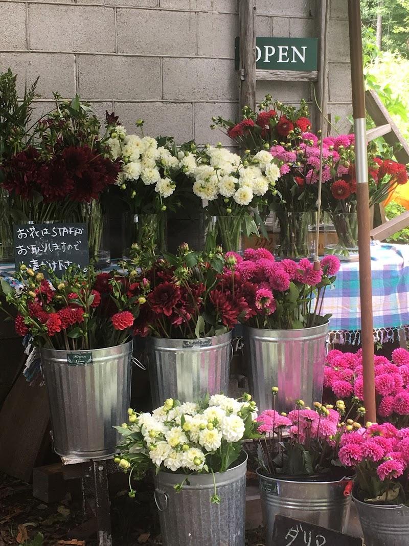 Flowers for Lena