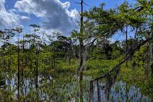 Blue Elbow Swamp, Orange, United States