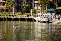 Dolphin Seafari, Hilton Head, United States