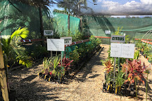 Daleys Fruit Tree Nursery, Kyogle, Australia