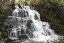 Gunnison National Forest, Gunnison, United States