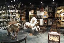 Cici & Hyatt Brown Museum of Art, Daytona Beach, United States