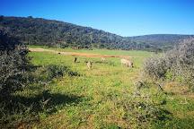 Parque Nacional dos Elefantes Addo, Addo Elephant National Park, South Africa