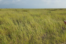 Padre Island National Seashore, Corpus Christi, United States