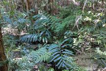 Wanggoolba Creek, Fraser Island, Australia