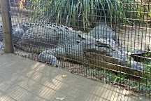 Hartley's Crocodile Adventures, Palm Cove, Australia