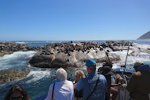 Seal Island, Cape Town, South Africa