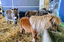 Miniature Pony Centre, North Bovey, United Kingdom