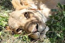 Abana Safaris, Nairobi, Kenya