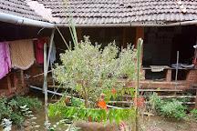 Tanshikar's Working Organic Spice Farm, Sanguem, India