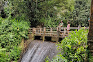 Bosque Nacional El Yunque