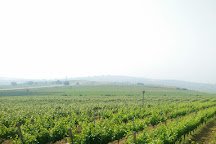 Barbare Vineyards, Tekirdag, Turkey