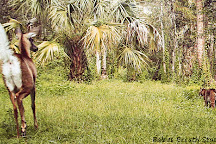 Captain Steve's Swamp Buggy Adventures, Everglades City, United States