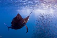 Reel In Luxury Sport Fishing, Quepos, Costa Rica