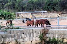 Dreams of Horses Farm, Xaghra, Malta