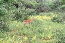 Mokolodi Nature Reserve, Gaborone, Botswana