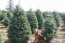 Usher's Tree Farm, Canby, United States