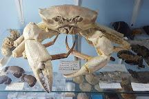 Griffiths' Sea Shell Museum & Marine Display, Lakes Entrance, Australia