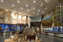 Mammoth Museum, Yakutsk, Russia