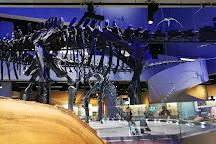 Lee Kong Chian Natural History Museum, Singapore, Singapore