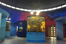 Riverwatch Aquarium and Visitor Centre, Derry, United Kingdom