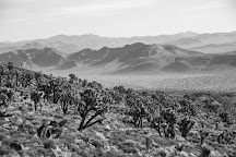 Lee Flat Joshua Trees, Death Valley National Park, United States