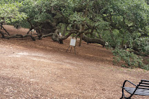 Angel Oak Tree, Johns Island, United States