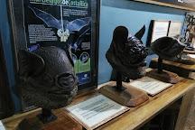 The Bat Jungle, Monteverde, Costa Rica
