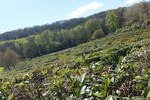 Labyrinthe Geant des Monts de Gueret, Gueret, France