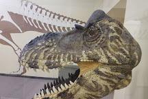 The Dinosaur Museum, Blanding, United States