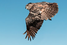 Sussex Falconry, Herstmonceux, United Kingdom