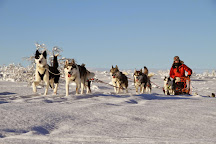 Hetta Huskies, Enontekio, Finland