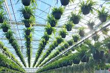 Anna's Garden, Home & Wellness, Kingsville, Canada