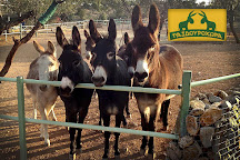 Donkey's Land, Koropi, Greece