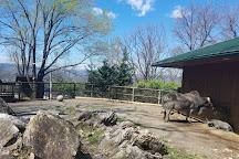 Mill Mountain Zoo, Roanoke, United States