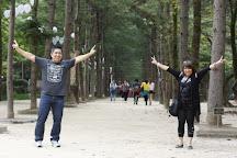 This is Korea Tours, Seoul, South Korea
