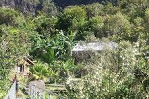 Grand Bassin, La Plaine des Cafres, Reunion Island
