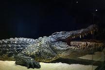 Phuket Crocodile World, Chalong, Thailand