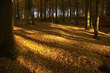 Sonian Forest, Brussels, Belgium