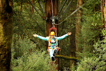 Otway Fly Treetop Adventures, Weeaproinah, Australia