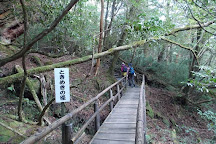 Yakusugi Land, Yakushima-cho, Japan