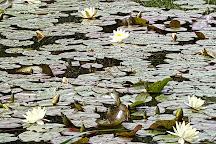 Parc Floral et Tropical de la Court d'Aron, Saint-Cyr-en-Talmondais, France