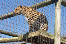 The Big Cat Sanctuary, Smarden, United Kingdom