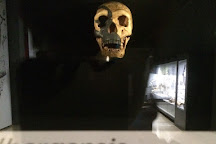 Museo de Prehistoria y Arqueologia de Cantabria, Santander, Spain